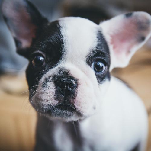 Ein gutes Geschäft? Ist das Billigste immer das Beste? Hundewelpen im Angebot.